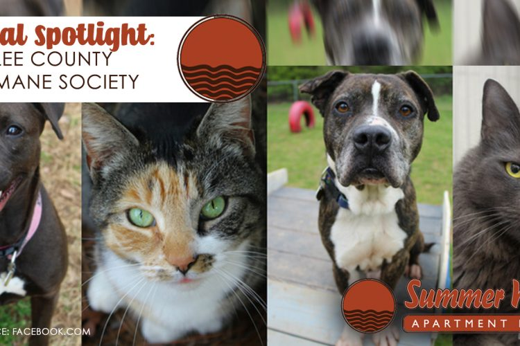 Local Spotlight: Lee County Humane Society