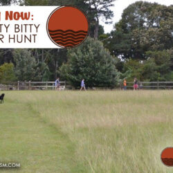 Auburn's Itty Bitty Scavenger Hunt